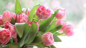 kwiaty, bukiet różowych tulipanów