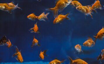 Dekoracje do akwarium